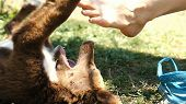 Naughty Little Puppy Bites Woman Feet And Nibbles On Nature Shoes Close Up, Slow Motion. poster