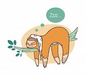 Adorable Sloth Sleeping On Branch. Lazy Wild Jungle Animal Taking Nap Or Dozing On Rainforest Tree.  poster