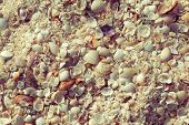 Natural Sand And Shells Background. Black Sea Shell On The Coast. Seashells Collection. Close Up. To poster