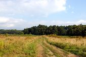 picture of sakhalin  - The Field with dry yellow herb and road which guides to wood autumn - JPG