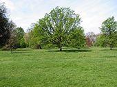 picture of kensington  - Hyde Park  - JPG