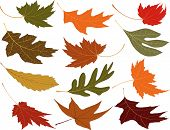 stock photo of fall leaves  - Wind blown fall leaves to add to your designs - JPG