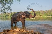 foto of bathing  - Cute nice elephant bathing Kerala India Asia - JPG