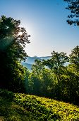 picture of asheville  - Blue Ridge Parkway Scenic Landscape Appalachian Mountains Ridges Sunrise Layers over Great Smoky Mountains - JPG
