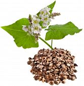 picture of buckwheat  - buckwheat plant flowering and buckwheat grain heap  isolated on white background - JPG
