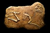 picture of dinosaur skeleton  - Skeleton of Hadrosaurus in stone on a black background - JPG