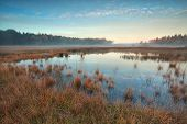 foto of swamps  - autumn sunrise over forest swamp Friesland Netherlands - JPG