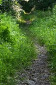 Hiking Trail In Woods poster