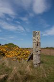 stock photo of anglesey  - Anglesey Coastal Path in spring with yellow gorse out Inland Sea Anglesey North Wales - JPG