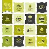 foto of olive trees  - Quality set of icons that can be used in the olive and olive oil work - JPG