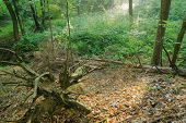 stock photo of rotten  - Rotten trunk in forest landscape view in the morning - JPG