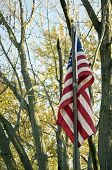 stock photo of flag pole  - The United State of America flag hangs on a flag pole motionless with a backgroun of trees - JPG