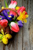 pic of purple iris  - Arrangement of Yellow Daffodils Magenta Tulips Purple Irises in Wicker Basket with Yellow Easter Eggs closeup on Rustic Wooden background - JPG