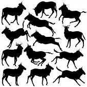foto of wildebeest  - Set of illustrated silhouettes of adult wildebeest standing - JPG