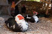 foto of hen house  - Hen house in a farm of Sicily - JPG