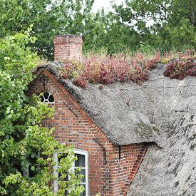 stock photo of gable-roof  - The planting with houseleek  - JPG