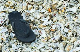 stock photo of oyster shell  - A flip flop left on a bed of oyster shells symbolizes both the causal lifestyle and seafood based economy of the Lowcountry around Bluffton - JPG