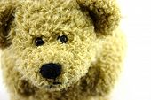 picture of teddy-bear  - Brown cute teddy bear closeup separated white - JPG
