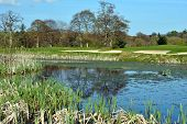 foto of sand lilies  - colorful view on a golf course in wicklow ireland - JPG