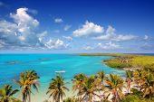 Постер, плакат: Аэрофотоснимок Contoy тропический остров Карибского бассейна Мексика пальмовых деревьев и море