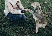 Cute Gray Dog With Funny Emotions In Park Giving Paw To Owner. Dog Shelter. Adoption Concept. Woman poster
