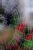 pic of spider web  - A spider web covered in dew droplets with out of focus bright flowers in the background