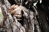 A Terrifying Burnt Doll Head Inside A Tree Trunk poster