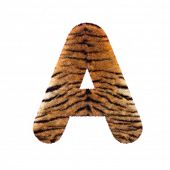Tiger letter A - Capital 3d Feline fur font isolated on white background. This alphabet is perfect f poster