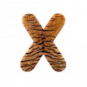 Tiger letter X - Capital 3d Feline fur font isolated on white background. This alphabet is perfect f poster