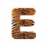 Tiger letter E - large 3d Feline fur font isolated on white background. This alphabet is perfect for poster