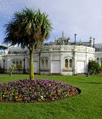 image of devonshire  - Palm tree and hyacinths in public flowerbeds in front of the Pavilion on Torquay promenade  - JPG