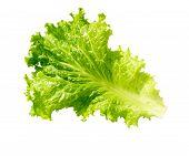 Lettuce Fresh. Salad Leaf. Lettuce Isolated On White Background. Fresh Green Lettuce Leaves. poster