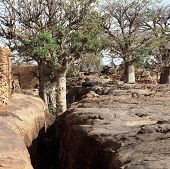 image of dogon  - Traditional Graineries in Dogon village Lower Idjeli Mali, West Africa