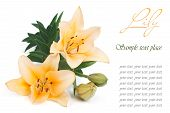 Holiday card with yellow lily and the text on a white