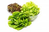 stock photo of butter-lettuce  - Lettuce leaves - JPG