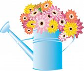 picture of green-blue  - Vector illustration for Blue watering can with flowers isolated on a white background - JPG