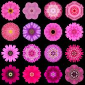 Big Collection Of Various Purple Pattern Flowers Isolated On Black