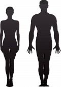 stock photo of sternum  - Standing naked man and woman - JPG