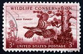 Postage Stamp Usa 1956 Wild Turkey