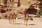 Man looks for tourists for camel ride