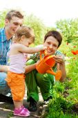 pic of family fun  - Young family watering plants in the garden - JPG