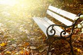 foto of bench  - empty white bench in sunny autumn park with - JPG
