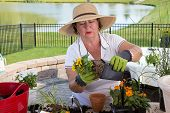 stock photo of pot  - Senior lady removing a rootbound pot from a pot in order to transplant it as she works at a counter on her outdoor pation in a rural setting with a lake - JPG