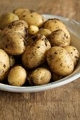 picture of solanum tuberosum  - New potatoes fresh out of the ground - JPG
