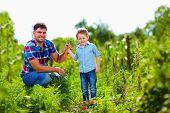 stock photo of harvest  - farmer family harvesting vegetables in summer garden - JPG