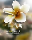 pic of pamphlet  - eps10 vector realistic flower on blurred background - JPG