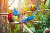 image of sun perch  - Beautiful macaws perched on a wooden post enjoying the warmth of the evening sun - JPG