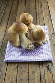 stock photo of boletus edulis  - Fresh boletus edulis on the table of the kitchen