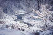 picture of snow forest  - Winter landscape of snow covered forest with icy river after snowfall - JPG