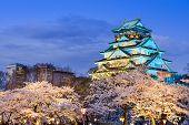 stock photo of night-blooming  - Osaka - JPG